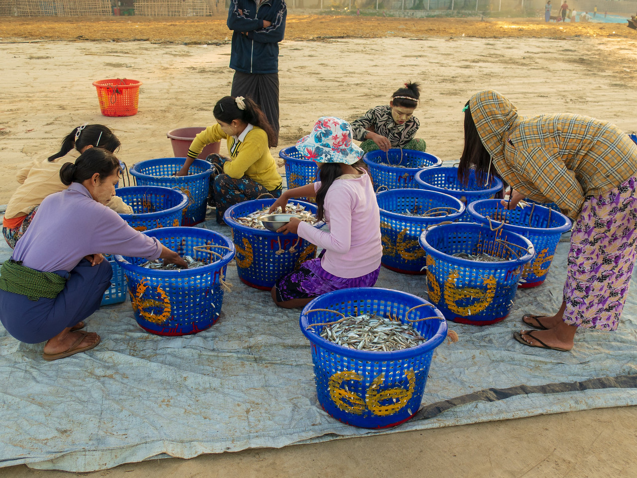Baskets of Fish Being Prepared for Drying