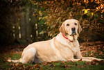 Pet Photography Dog 1