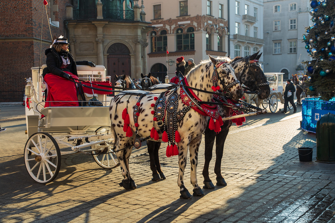 Horse and Carriage Rides Are Available From Krakow's Old Town Square