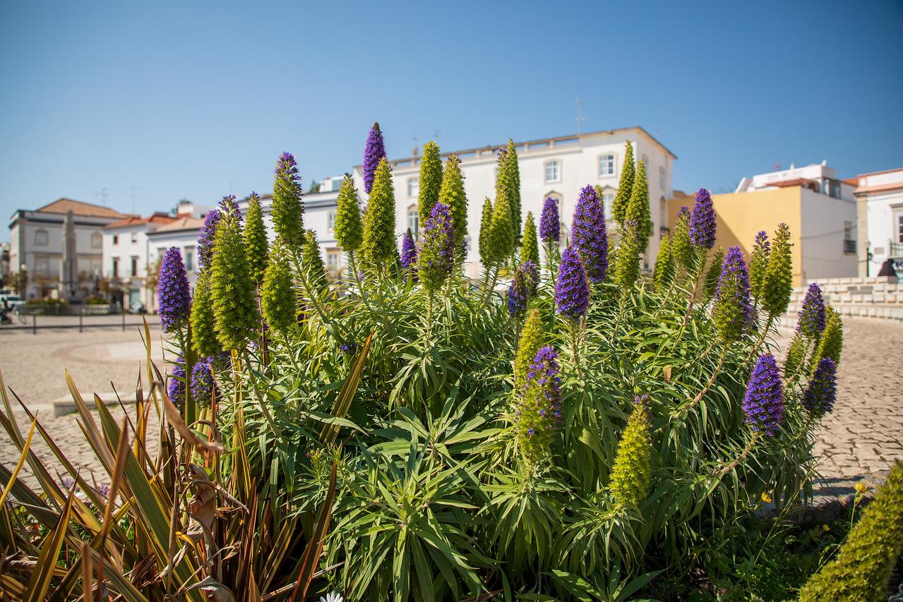 Garden Flowers in Tavira