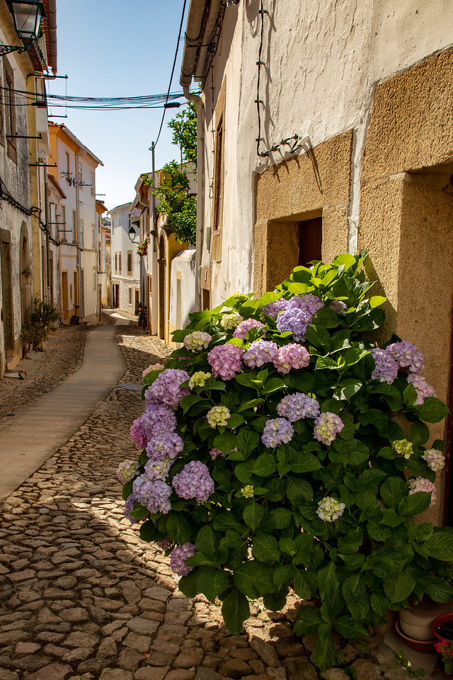 Street View With Flowers of Castelo de Vide, Portugal