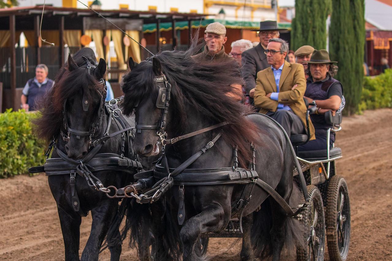 Horses Pulling A Wagon At The Golega National Horse Fair (Feira Nacional do Cavalo)