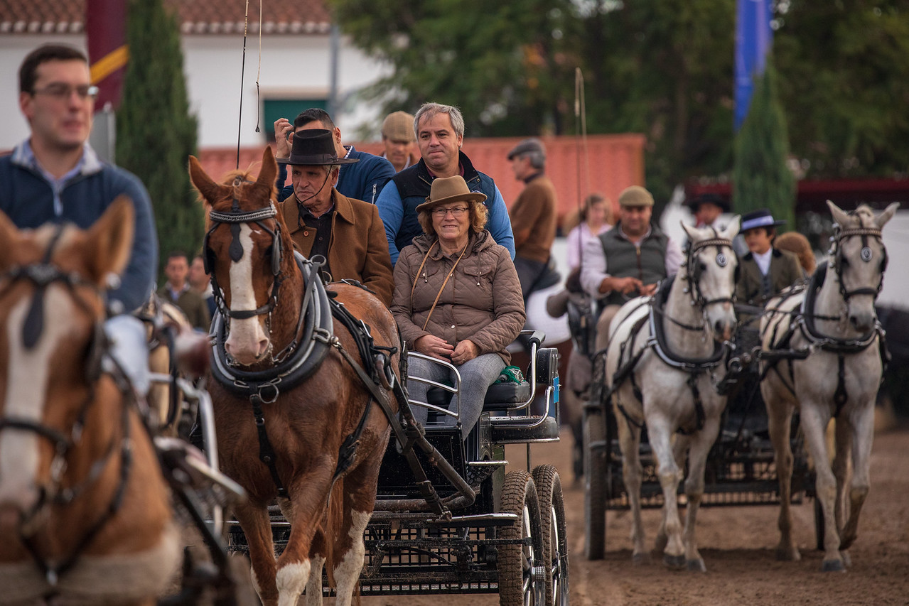 Rider At The Golega National Horse Fair in Portugal