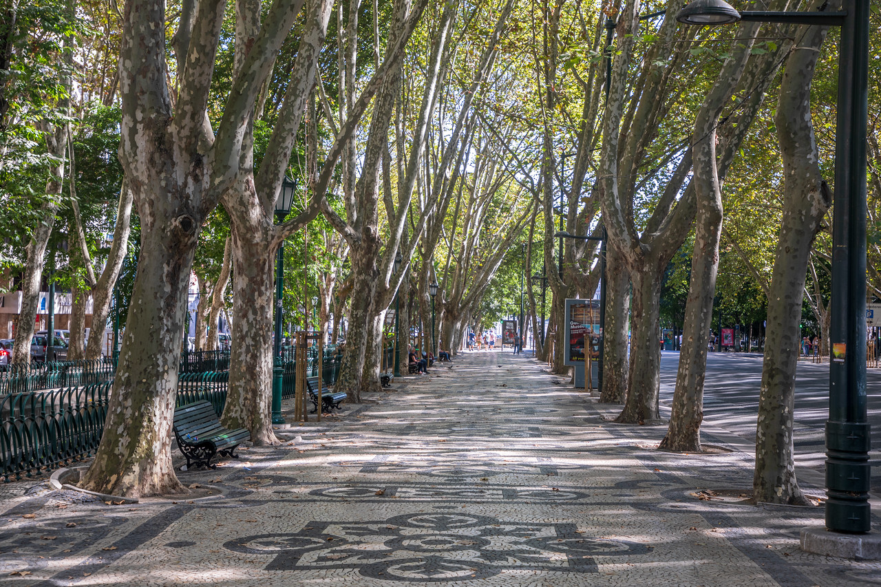 Sight to See in Lisbon Tree Lined Path Along Avenida da Liberdade
