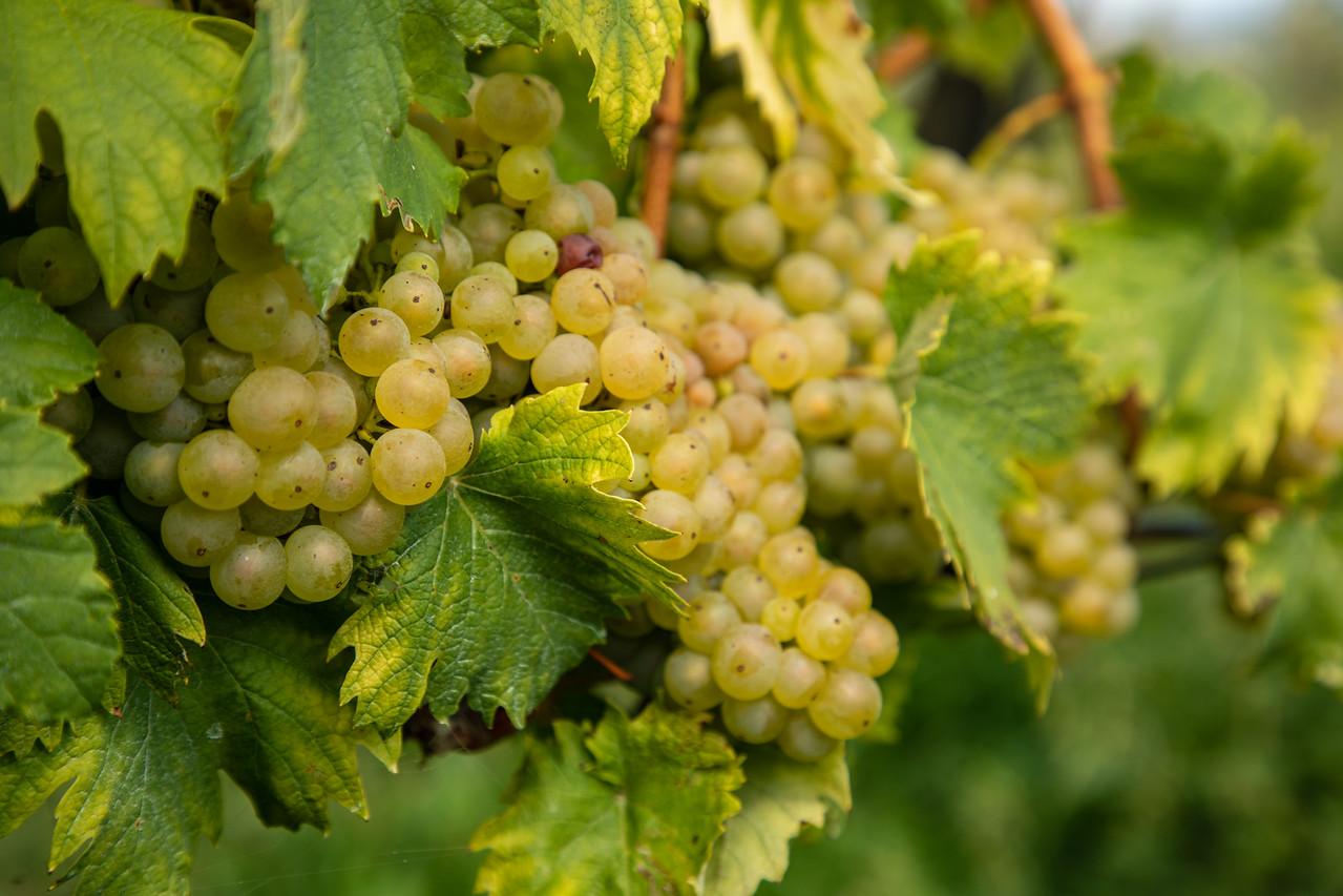 Словенская еда и вино Словенская еда и вино BL2A9775 X2