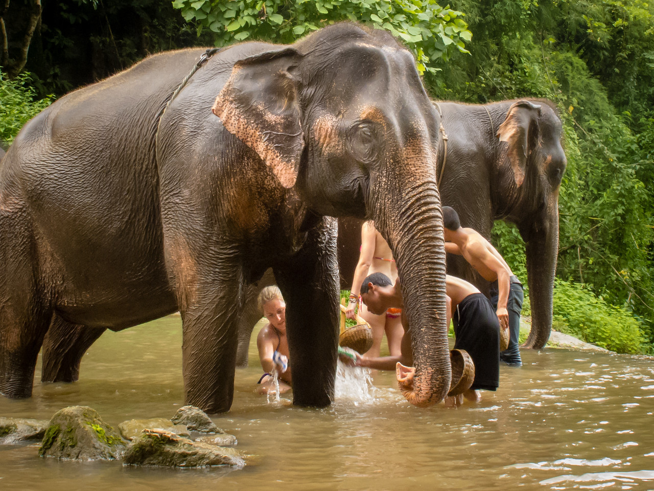 Bathing Elephants Can be Hard Work, but the Elephants Seem to Love It