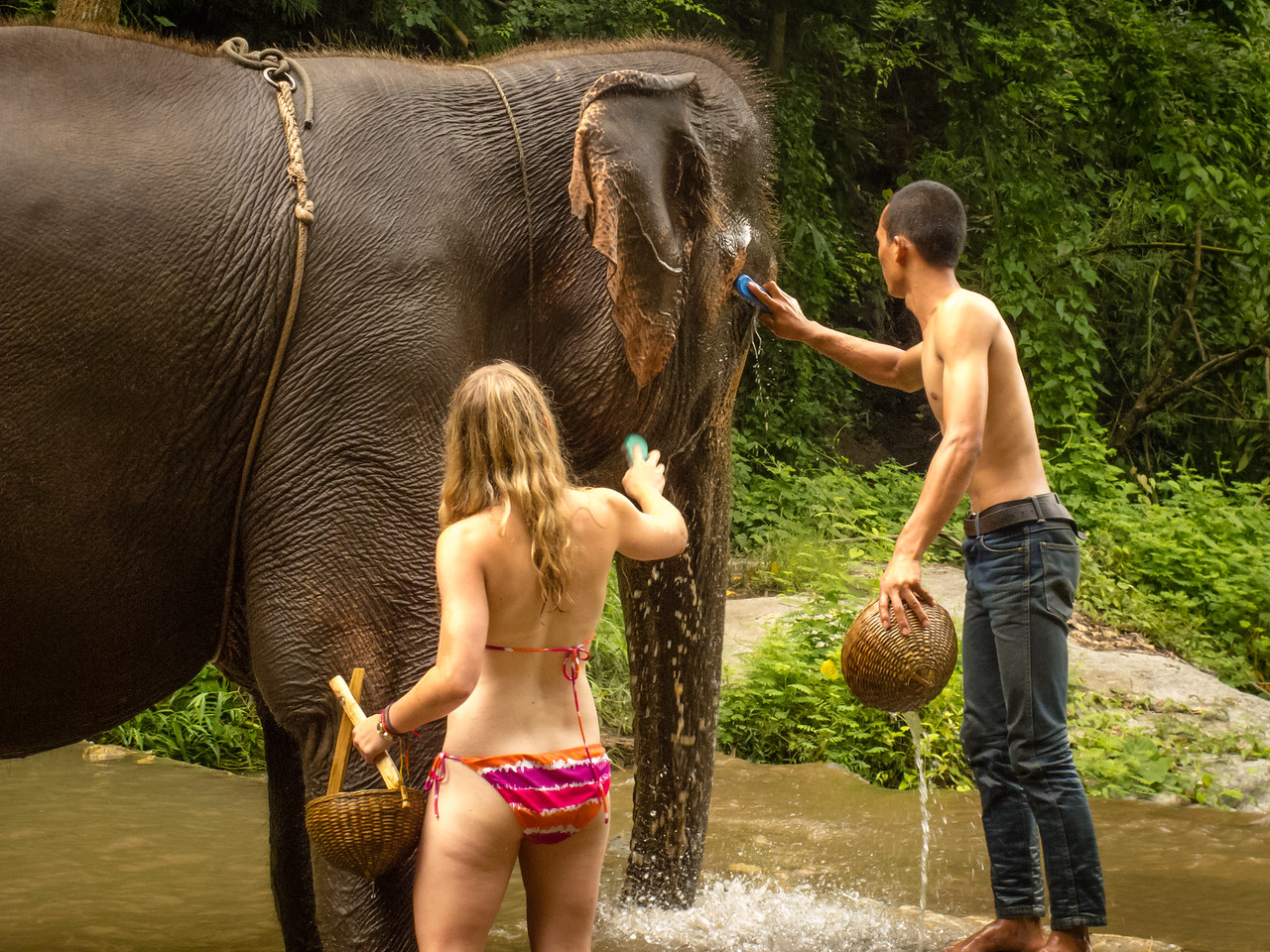 Girl in Bikini Bathing an Elephant in Thailand
