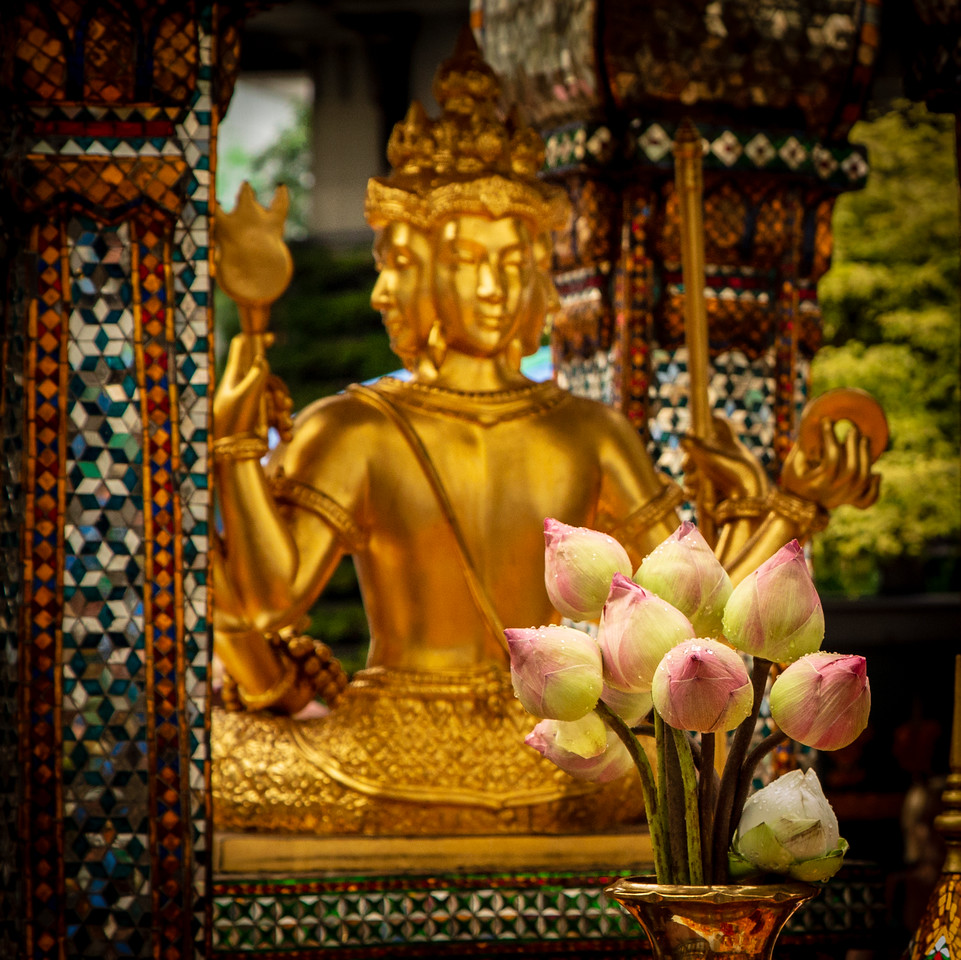 Lotus Blossoms in front of the Braman Hindu god named Than Tao Mahaprom at Erawan Shrine in Bangkok
