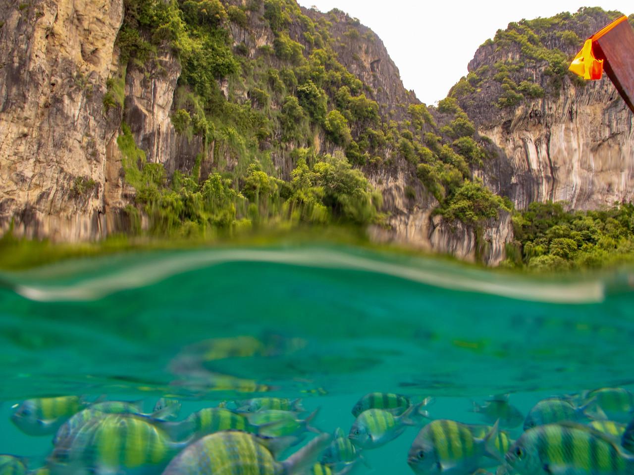 Sea Life Underwater in the Phi Phi Islands