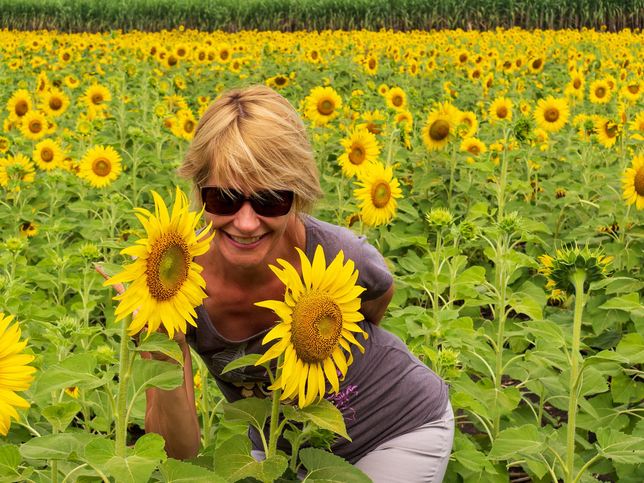 Sarah Frolicking in the Sunflower Fields of Lopburi, Thailand