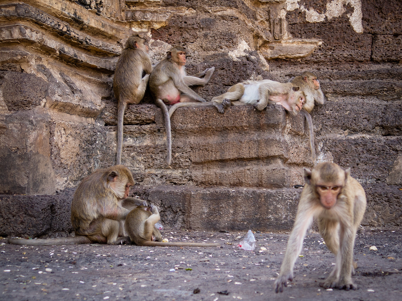 Monkeys at the Lopburi Monkey Temple
