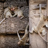 Monkeys of Lopburi