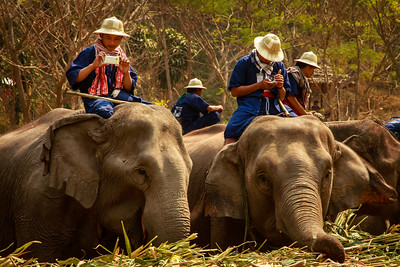 National Elephant Day Thailand