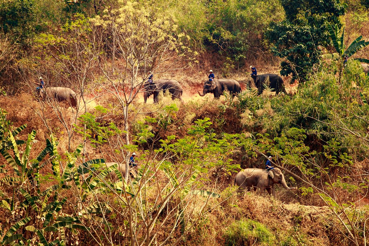 National Elephant Day Thailand