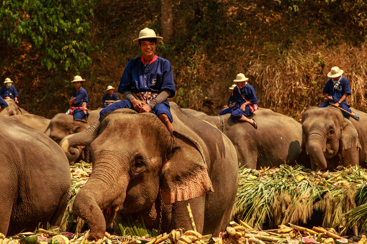 Mahout Riding and Elephant During Thailand's National Elephant Day Celebration