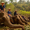 Thailand Natioanl Elephant Day
