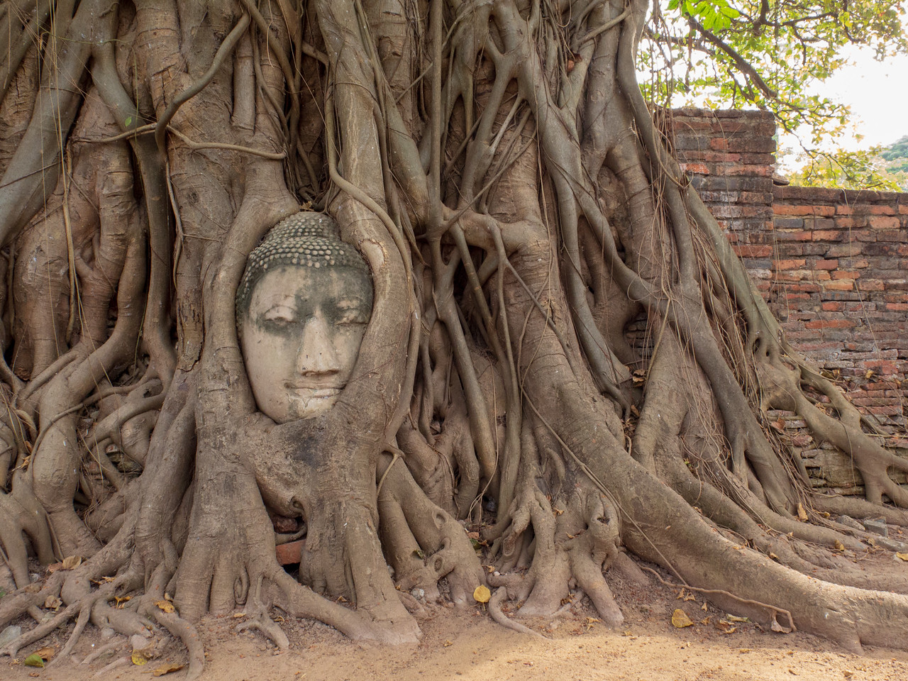 The Tree Bound Buddha of Wat Mahathat