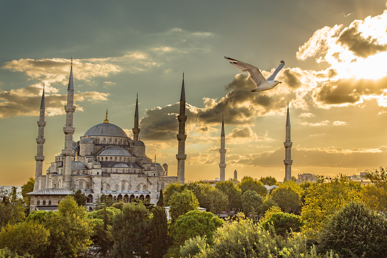 A Seagull Flies Past the Blue Mosque