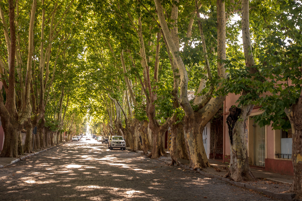 Shaded Boulevards Of Colonia del Sacramento Uruguay