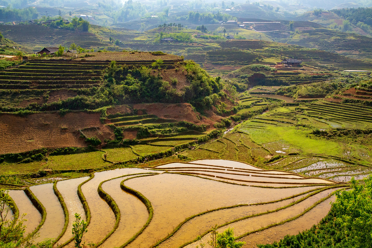Sapa Rice Terraces