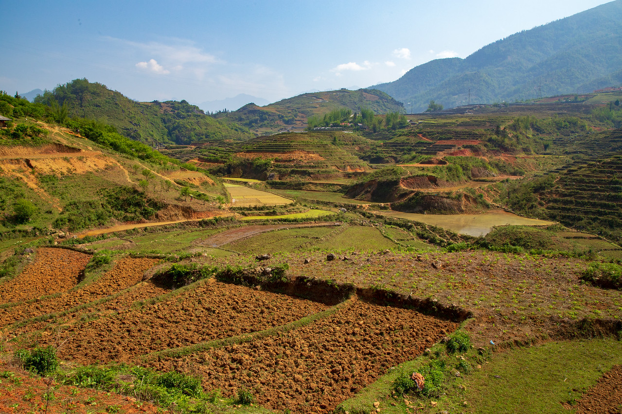 We were at the Sapa Rice Terraces Just in Time for Planting