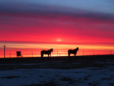 Becky A. Dickman Silouettes In The Sunrise I was going up to get my morning paper when I saw this beautiful sunrise and the horses were kind enough to pose for me.