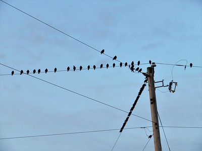 Becky A. Dickman - It's getting close to fall and the birds are gathering on the lines making a repeating pattern.