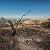 Chuck Knowles - Scorched plants from Idaho fire at Table Rock