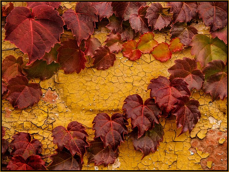 Marie Rakoczy 03-Leaves on Cracking Paint -