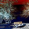 Miriam Kravis - abstract winter
