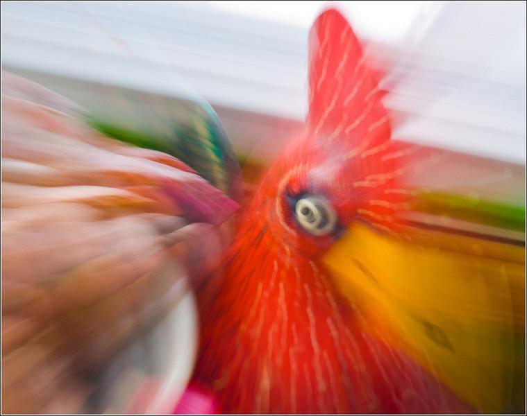 Scott Striker - Evil Eyed Rooster