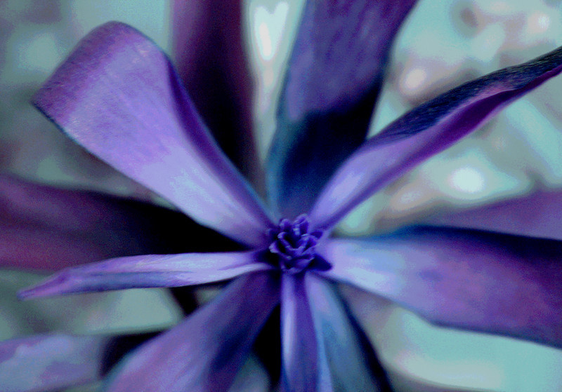 Blazek-purple flower