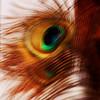 miriam-kravis-bird's eye