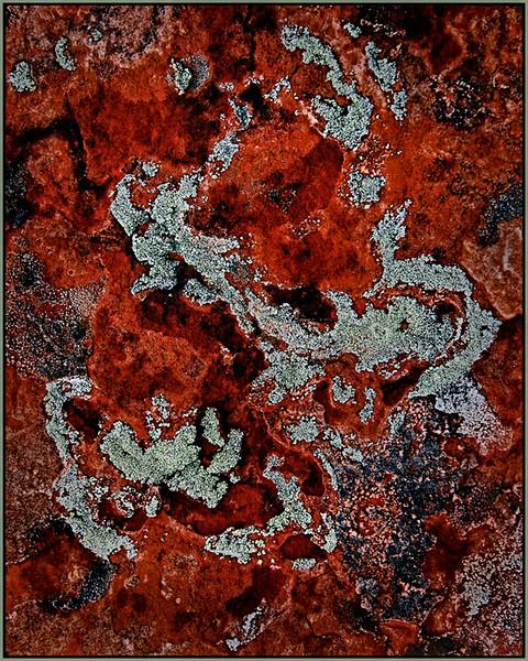Joe Rakoczy - Silvery Moon Lichen on Red Rock