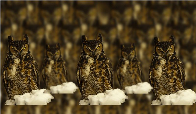 Gary Taylor - Owl Invasion