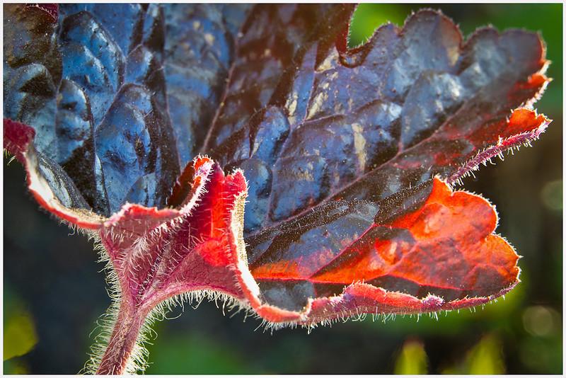Greg Pickle - Plant Leaf