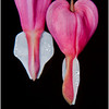 Scott Striker - Bleeding Hearts 2