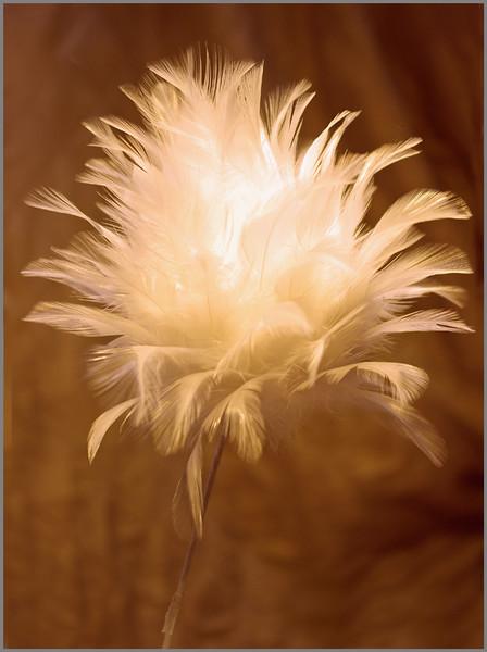 John Peterson-Fuzzy Flower