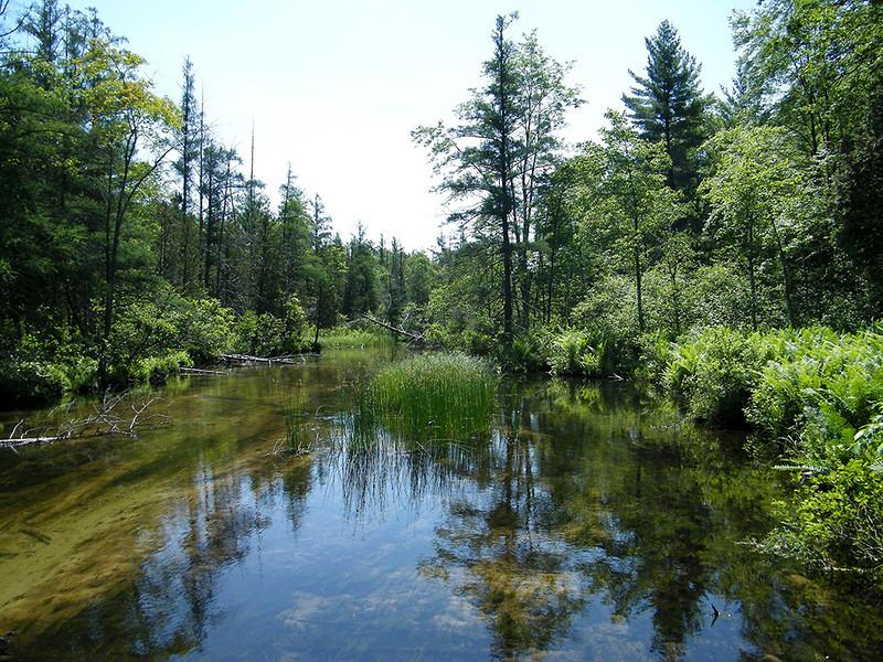 Ken Kendzy-Cleveland Creek