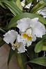 Bob Wallace-Orchid