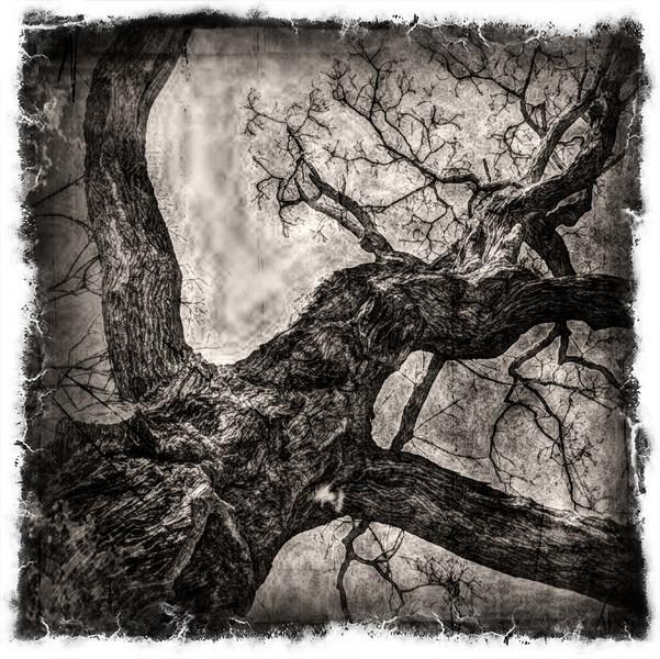Hug--Ron's-Tree