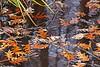 Bob Erickson-Leaves-water