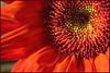 Sharon Peterson - Floral Sunburst