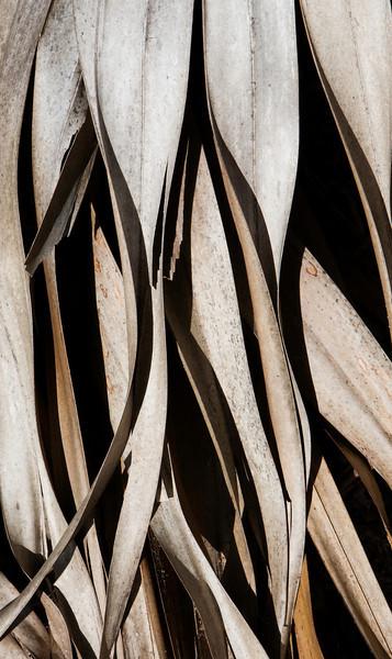 Abstract_2-Nora_Liu