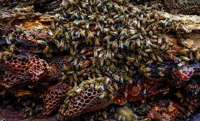 A Wild Hive