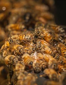 A Full Hive