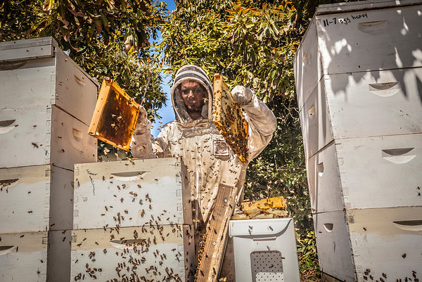 Beekeeper Checks Hives