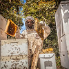 Beekeeper Checks Hives