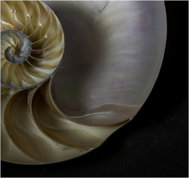 Shell - Gary Taylor