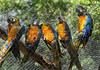 CETAS RJ Centro de Triagem de Animais Silvestres - Araras, Pendotiba, Rio de Janeiro, Brasil, Maio 9, 2012.  (Austral Foto/Renzo Gostoli)
